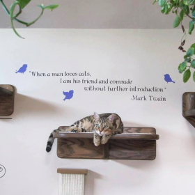 Accessorizing Your Cat Wall System