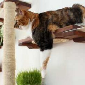 Different Types of Cat Wall Shelves